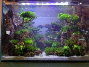 Một khu rừng thu nhỏ được đặt trong bể cá.