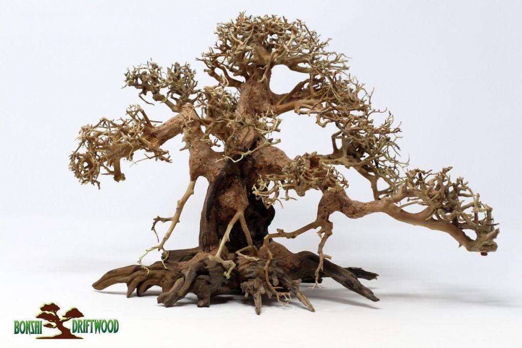 Cây cảnh khô- Bonsai Driftwood